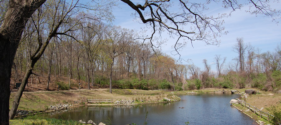 The banks of the freshwater pond in early spring