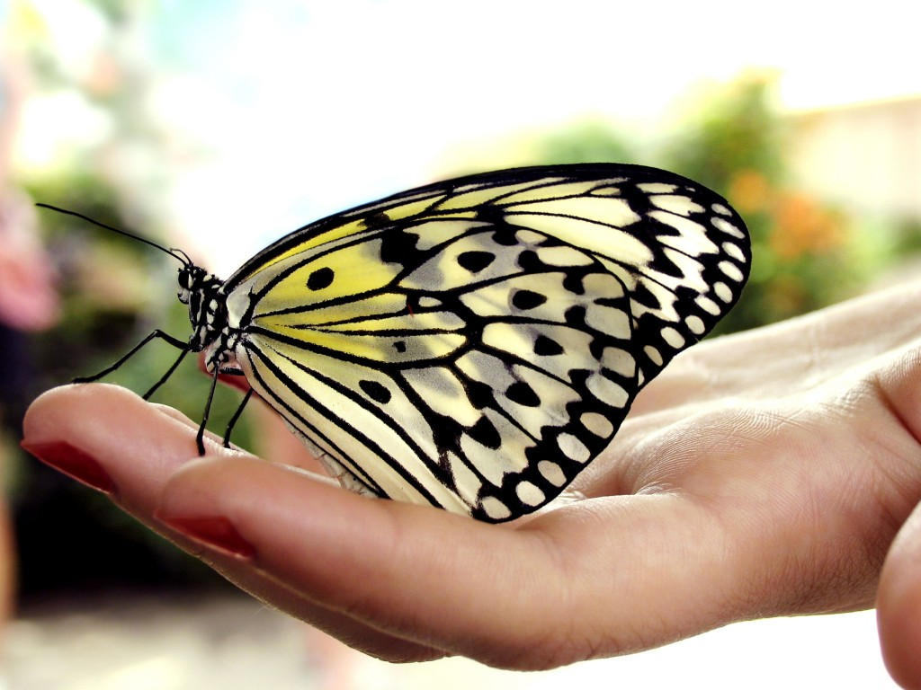 Best Wallpaper Butterfly Hand - Butterfly-Hand-1-1024x768  You Should Have_32758.jpg