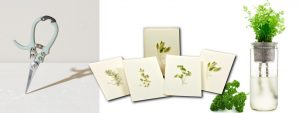 Gift package with cards, herb seed package, pruning sheers