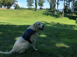 Ranger Eric Powers' yellow lab Gangsta, the service dog