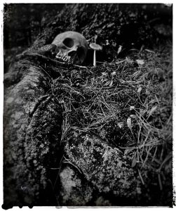 Black & White Photo of Scull in Woods