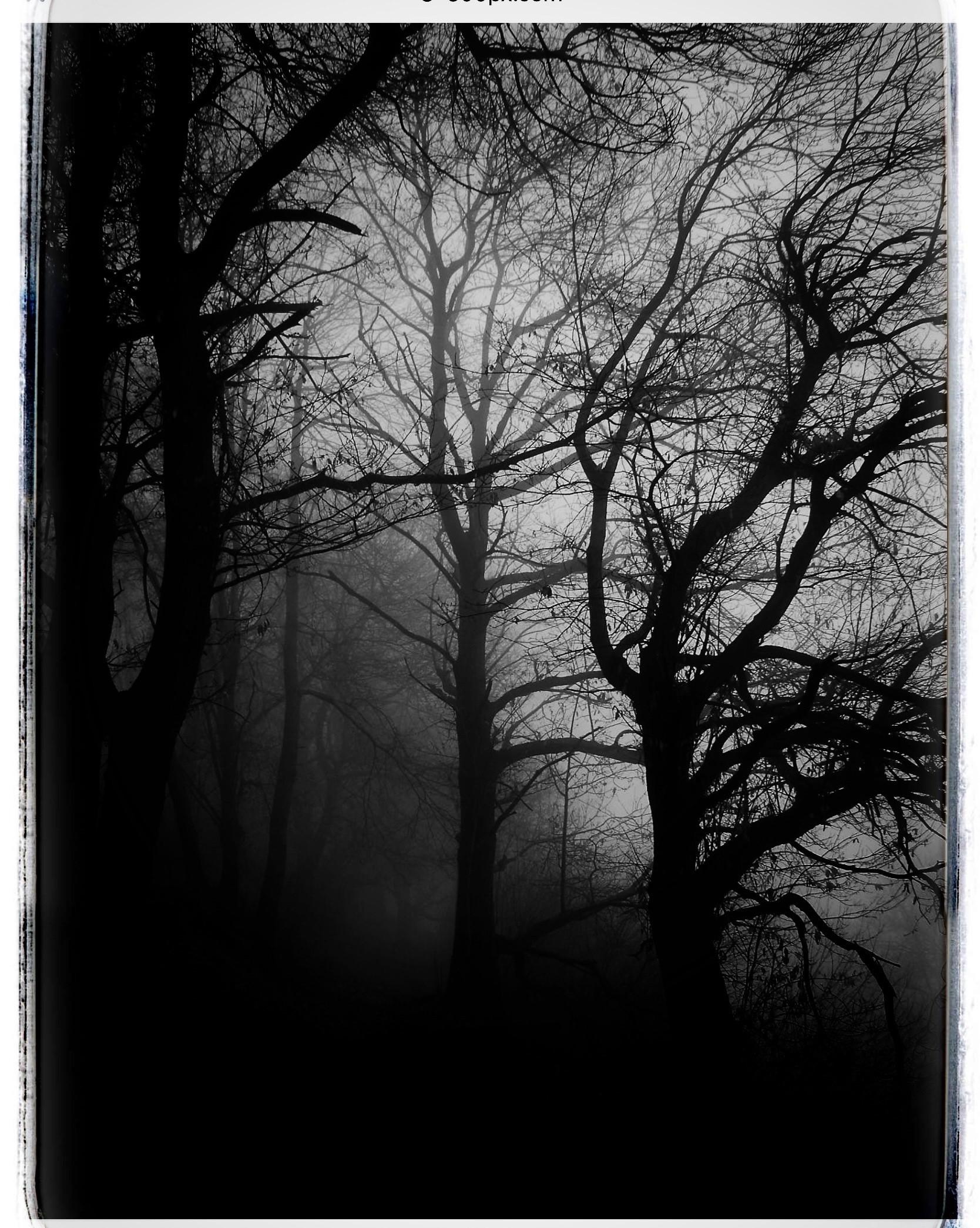 Black & White Haunted Trees
